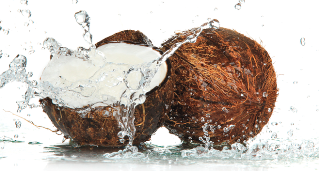 Coconuts – Does everything and more!