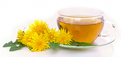 malaysia dandelion tea