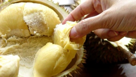 Durians – The King of Fruits and its nutrients