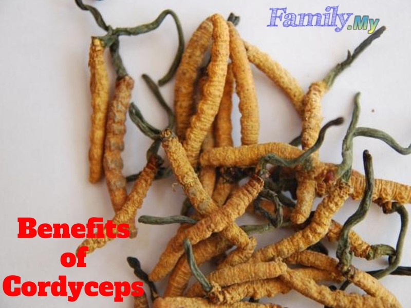 Benefits of Cordyceps
