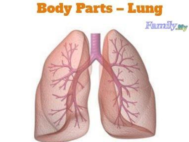Body Parts – Lung