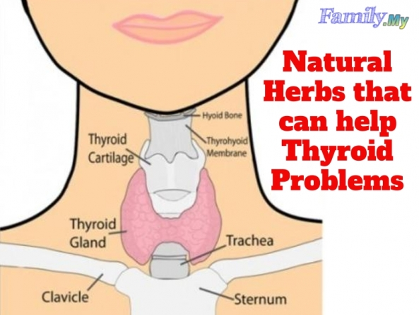 Natural Herbs that can help Thyroid Problems