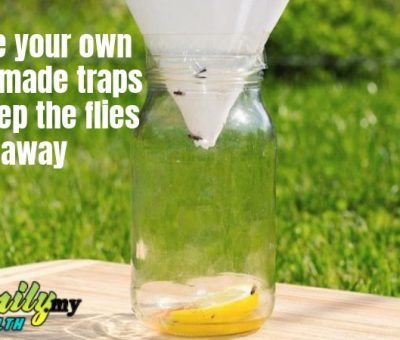homemade_traps_flies