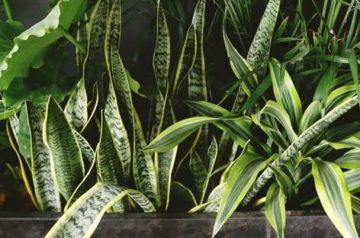 Clean your air at home with these houseplants