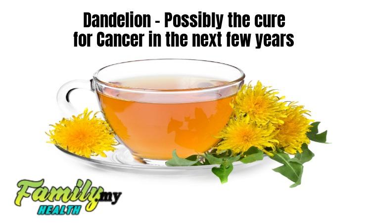 malaysia_dandelion_tea