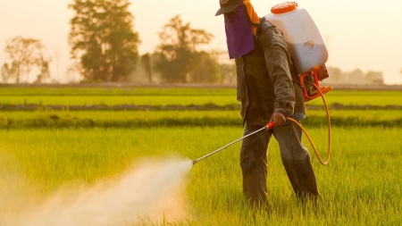 What are the top pesticide-laden foods?